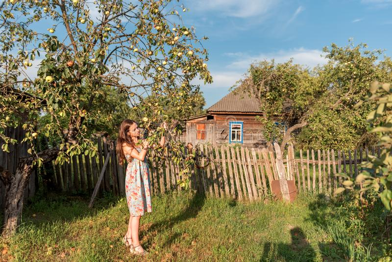 在木栅篱芭和一个被放弃的农村房子附近的一个土气庭院里包围的老苹果树有a的一个女孩 图库摄影