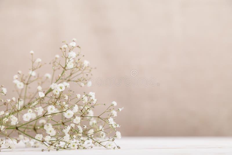 在木桌上的小白花麦在苍白淡色米黄背景 最小的生活方式概念 r 免版税库存图片