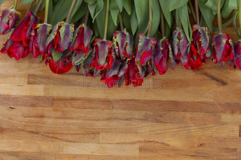 在木桌上的红色鹦鹉郁金香 库存照片