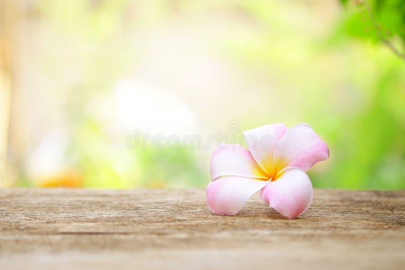Download 在木桌上的赤素馨花花 库存照片. 图片 包括有 巴厘岛, 本质, 对象, 工厂, 言情, 热带, 设计, 开花 - 62536786