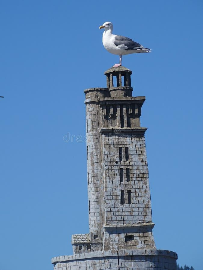 在木灯房顶的海鸥 库存图片
