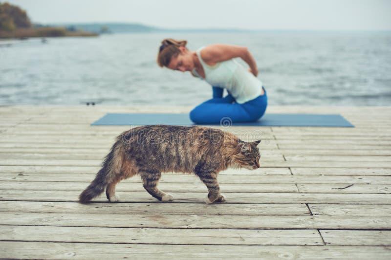 在木甲板的美丽的年轻女人实践瑜伽asana在湖附近 走在前景的猫 库存图片