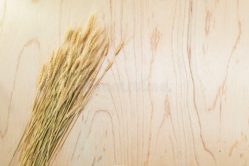 在木的大麦 库存图片