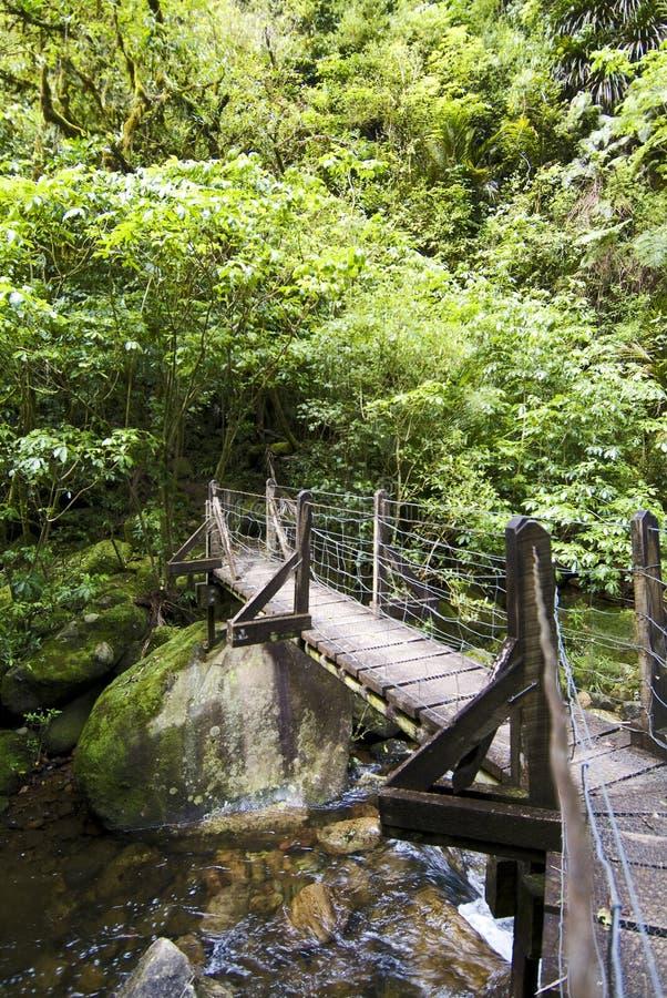 在木的桥梁小径 库存照片