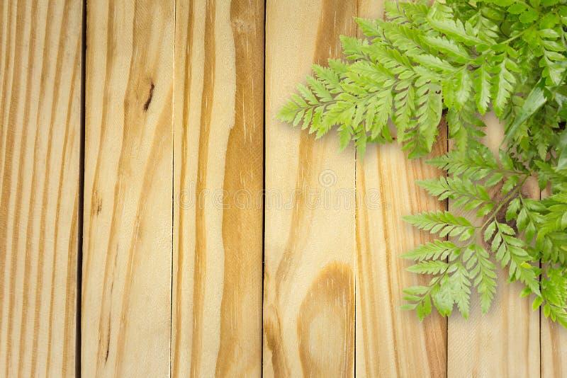 在木的绿色叶子与文本的,自然边界空间 免版税图库摄影