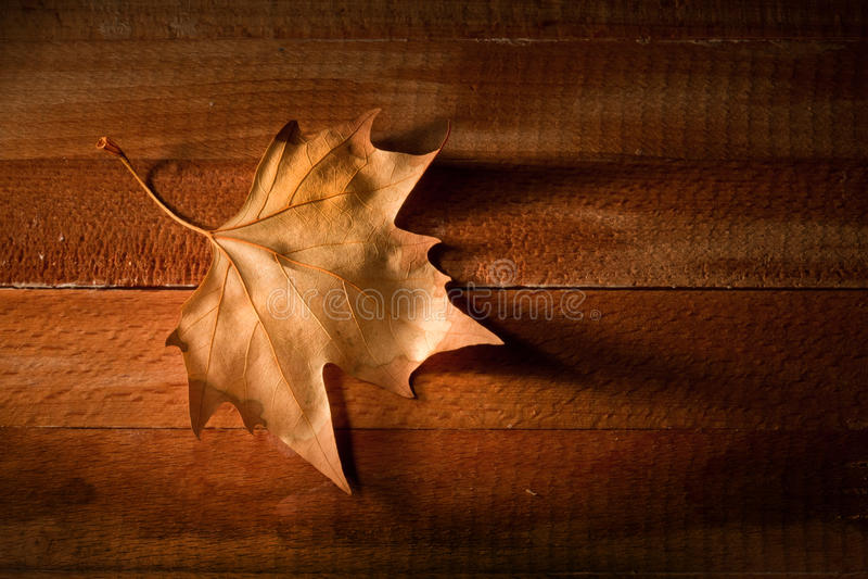 Download 在木的背景叶子 库存照片. 图片 包括有 空间, 设计, 靠山, 国界的, 粗砺, 艺术, 边缘, 自动驾驶仪 - 22352342