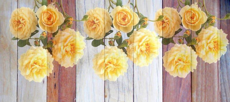 在木的英国玫瑰色花 免版税库存图片