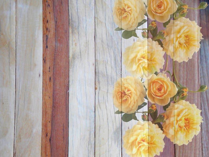 在木的英国玫瑰色花 库存图片
