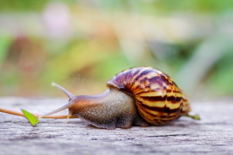 蜗牛包括有爬行,自然,腹足,a蜗牛,早晨,动物,皮肤绿色养的图片爬没了图片