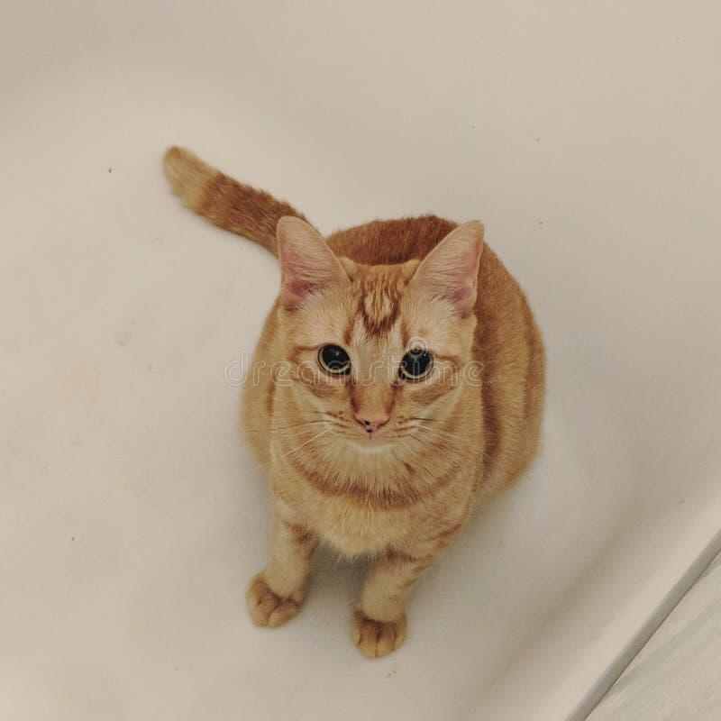 在木盆的猫 免版税图库摄影