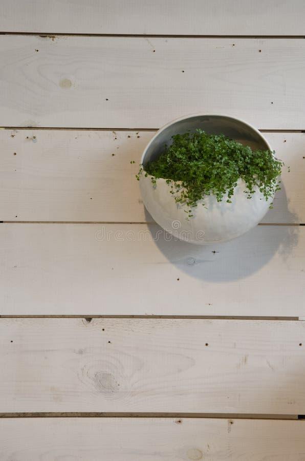 在木盘区垂悬的罐的植物 免版税图库摄影