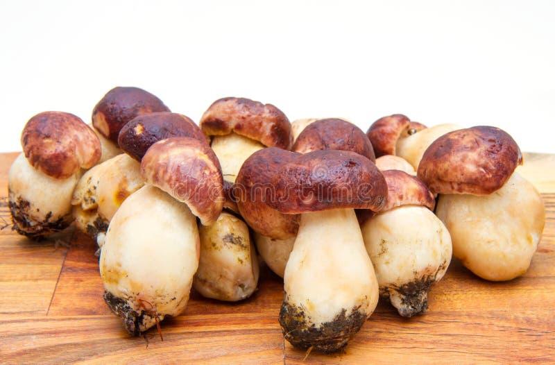 在木砧板的porcini蘑菇 免版税图库摄影