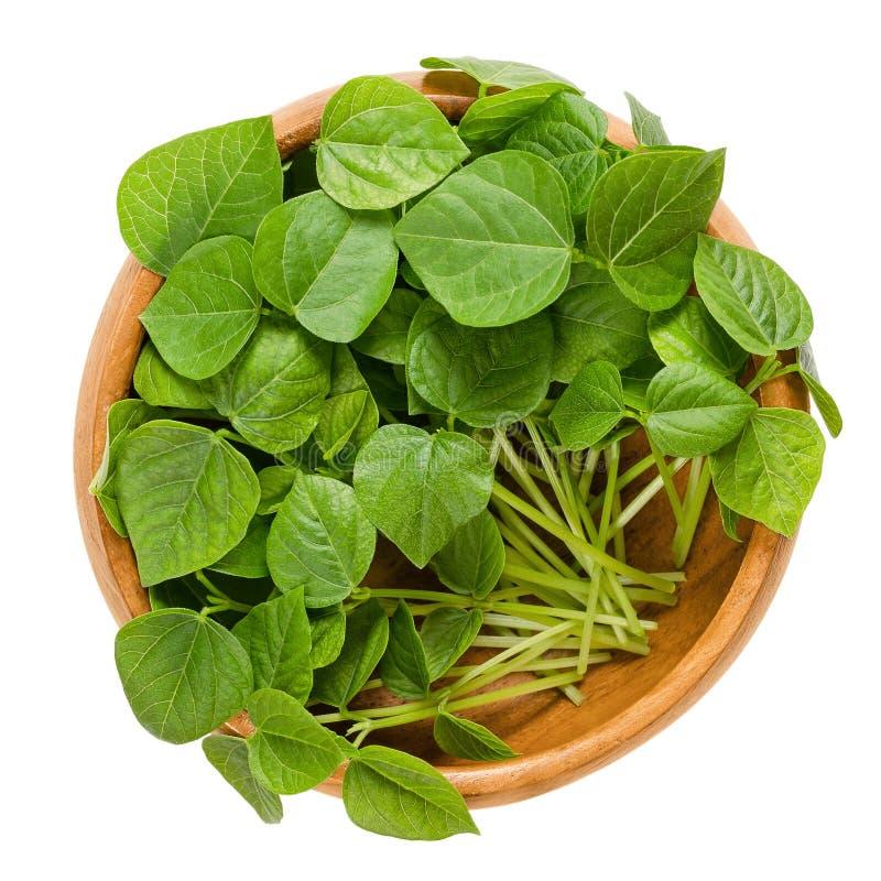 在木碗的小豆microgreens 图库摄影