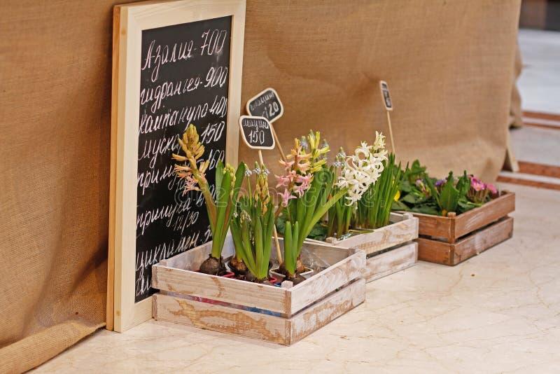 在木箱的美丽的风信花、穆斯卡里和秋海棠花在市场上 免版税库存照片