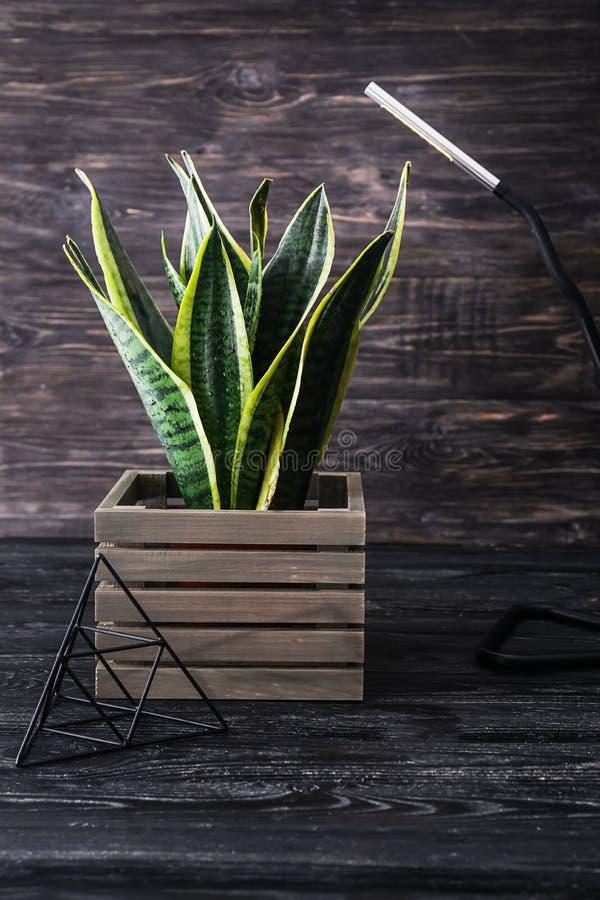 在木箱的美好的百合科植物在桌上 图库摄影