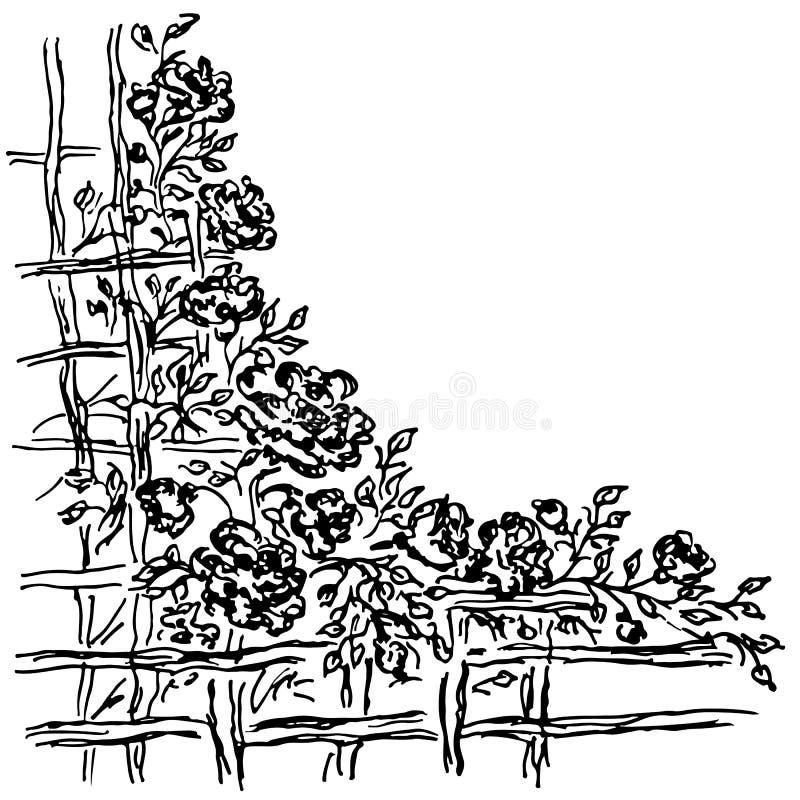 在木篱芭之外的许多玫瑰 抽象套的手拉的传染媒介例证在白色隔绝的花 手拉的剪影  向量例证