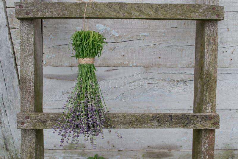 在木篱芭干燥的淡紫色花 免版税图库摄影