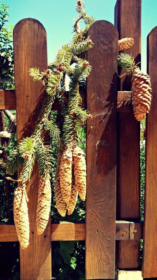 在木篱芭的杉木锥体 免版税库存照片