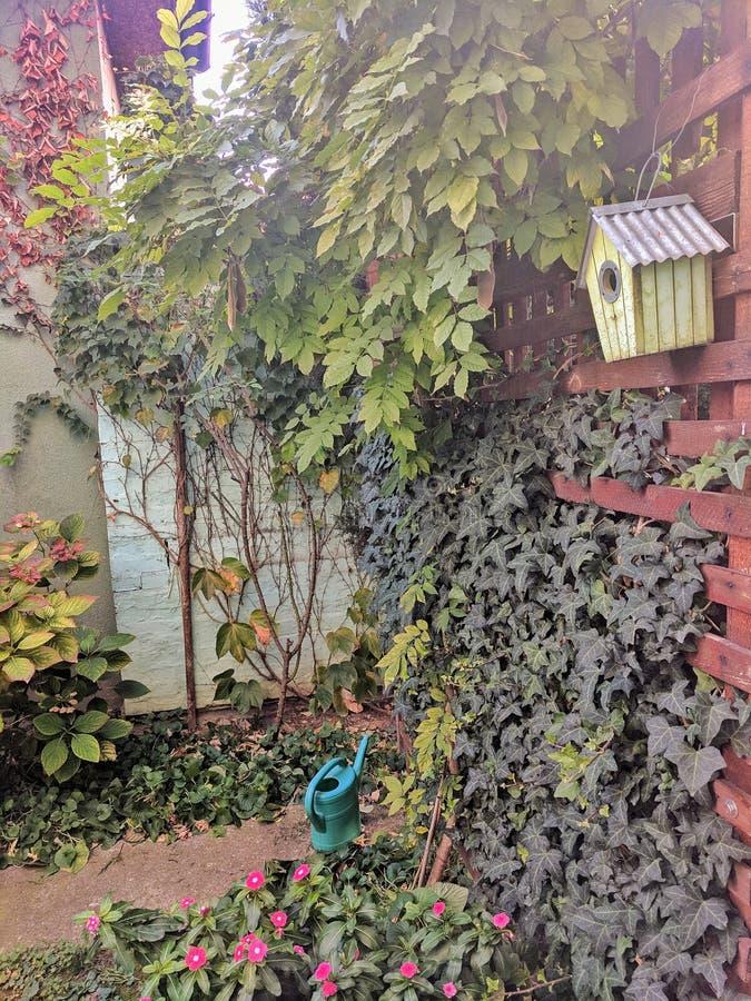 在木篱芭附近的开花植物在秋天季节期间的庭院里 免版税库存图片