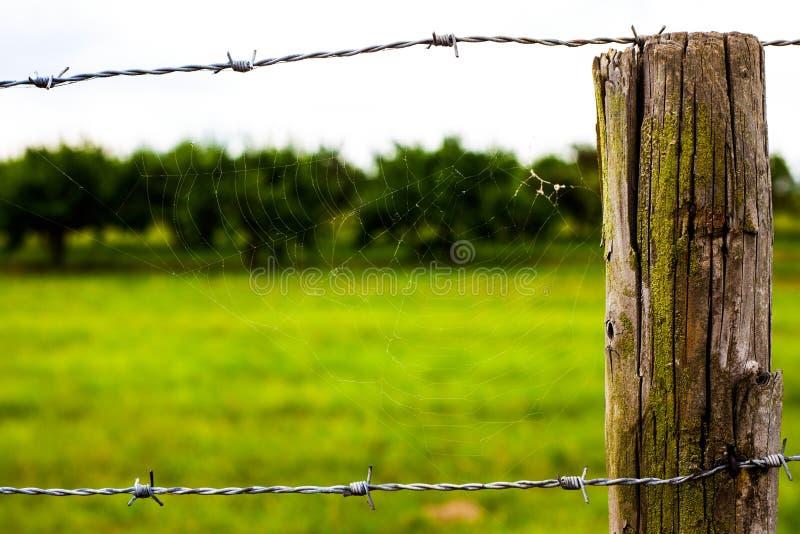 在木篱芭附近的蜘蛛网 库存照片