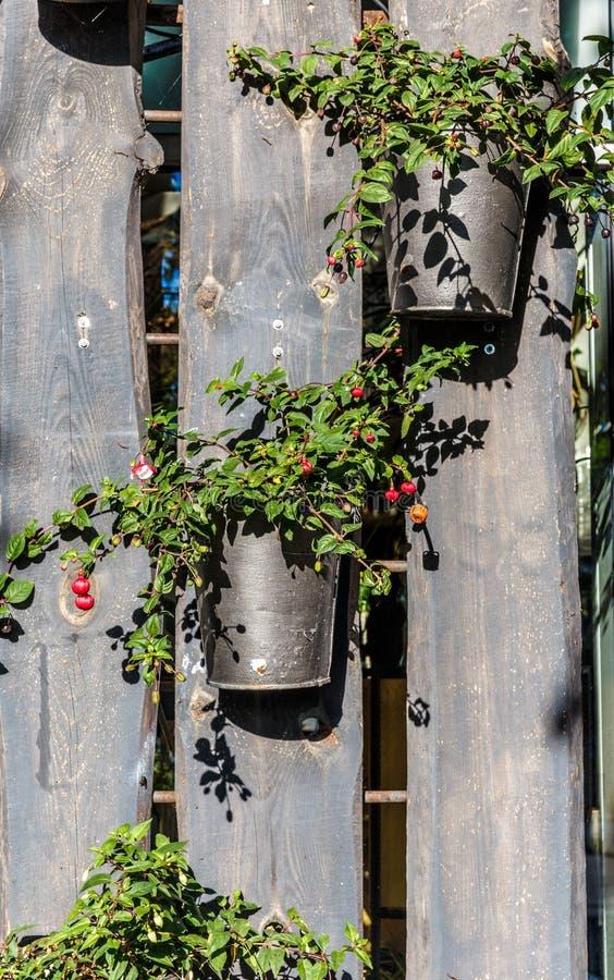 在木篱芭,花装饰,木板的花盆 免版税库存照片