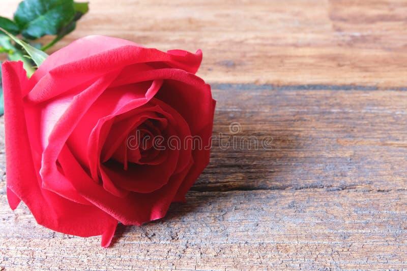 在木背景的一朵美丽的红色玫瑰 Valentine's天概念 库存照片