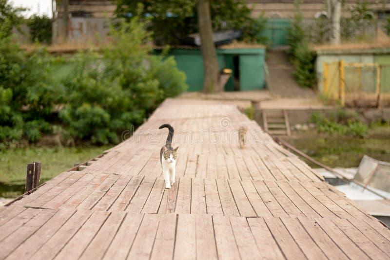 在木背景的两只猫在湖附近在温暖的夏日 免版税库存图片