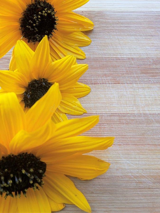 在木背景的向日葵线 免版税图库摄影