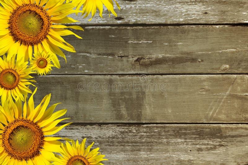 在木背景的向日葵 免版税库存照片