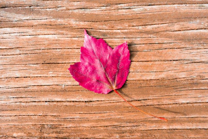 在木背景的唯一红色秋天枫叶 免版税库存照片