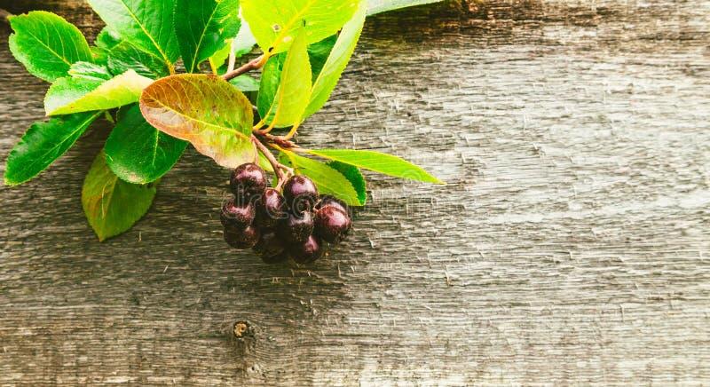 在木背景的堂梨属灌木 免版税图库摄影
