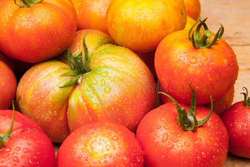 在木背景的成熟蕃茄 库存图片
