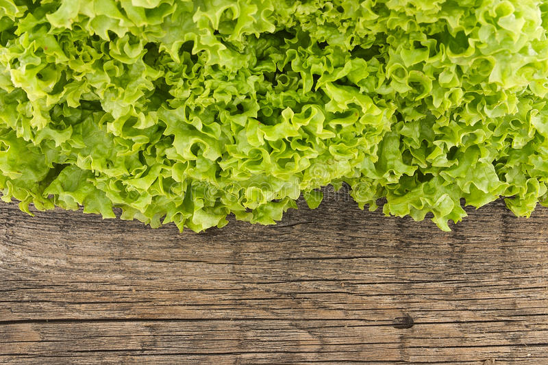 在木背景的新绿色莴苣salat 健康的食物 免版税库存图片