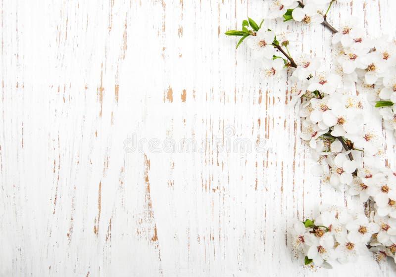 在木背景的春天开花 库存照片