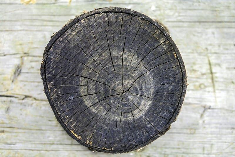 在木背景的树桩 图库摄影