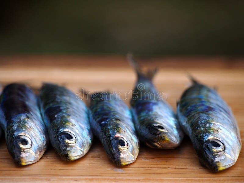 在木背景的沙丁鱼 库存图片