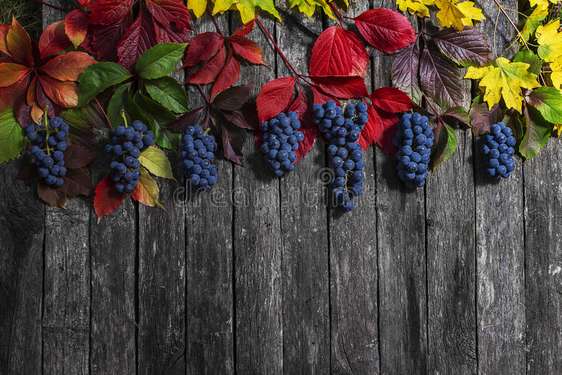 在木背景的狂放的葡萄秋叶 免版税图库摄影