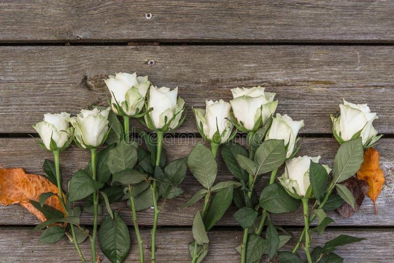 在木背景的白玫瑰 库存图片