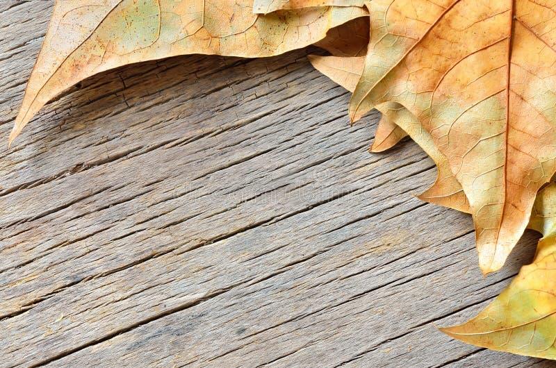 在木背景的秋叶 免版税图库摄影
