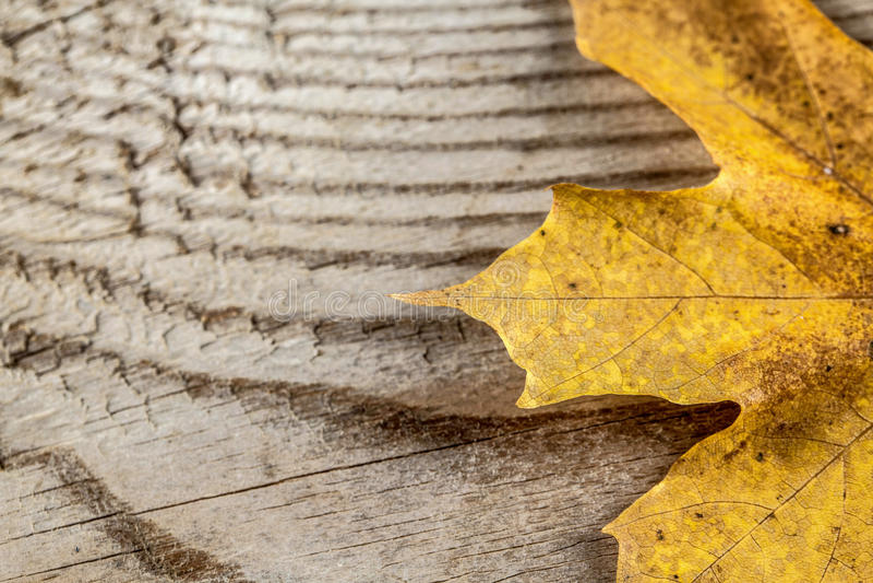 在木背景的秋天叶子 库存照片