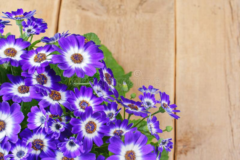 在木背景的紫罗兰色和白花 图库摄影