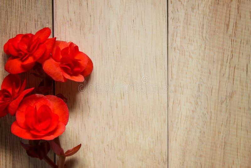 在木背景的红色玫瑰 情人节的图象 库存图片