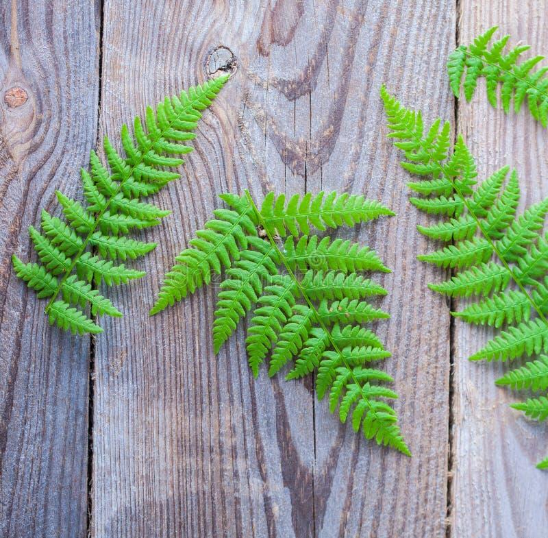 在木背景的绿色蕨 免版税库存照片