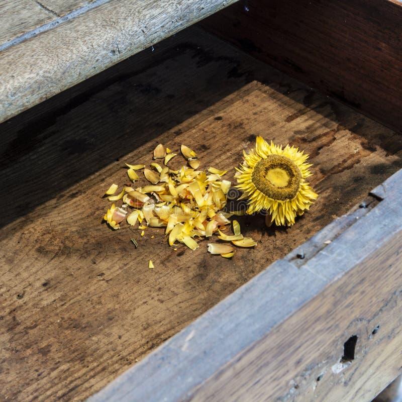 在木背景的老向日葵 免版税库存照片