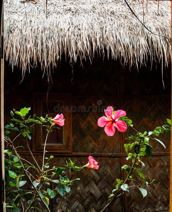 在木背景的花作为小屋 库存照片