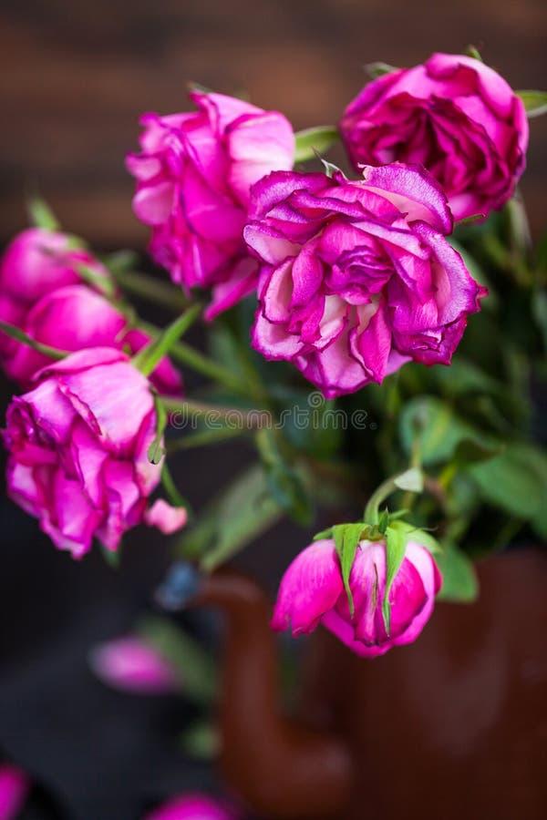 在木背景的退色的紫色玫瑰花 库存照片