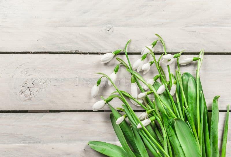 在木背景的Snowdrop花 免版税库存图片