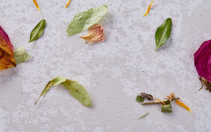 在木背景隔绝的套被分类的瓣,顶视图,特写镜头,选择聚焦 库存照片