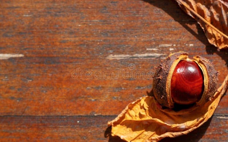 在木背景,桌的红褐色的栗子,与您的文本的拷贝空间,平的位置,顶视图 库存照片