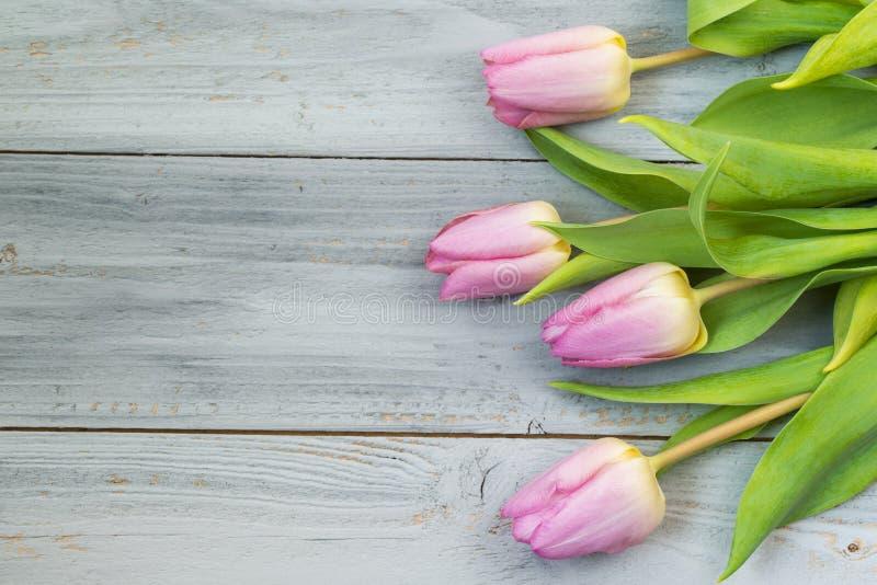 在木背景,顶视图的桃红色郁金香 图库摄影